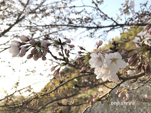 Photo 2018-03-23 16 56 41.jpg