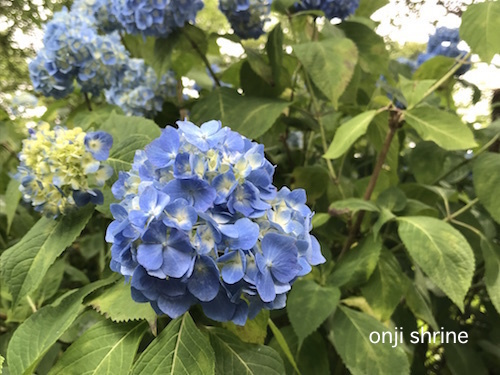 Photo 2019-06-04 14 36 37.jpg